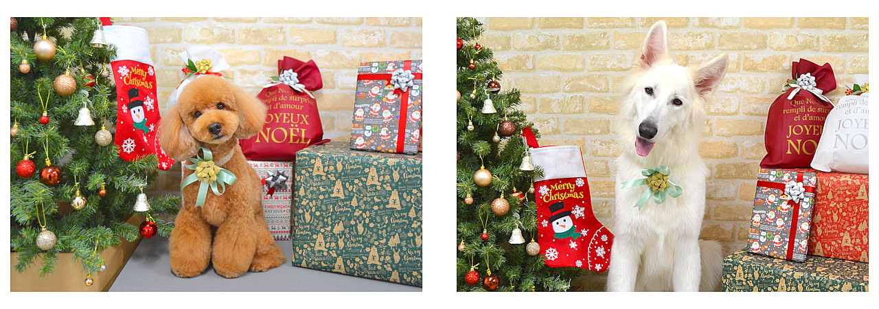 Christmasslide11.jpg