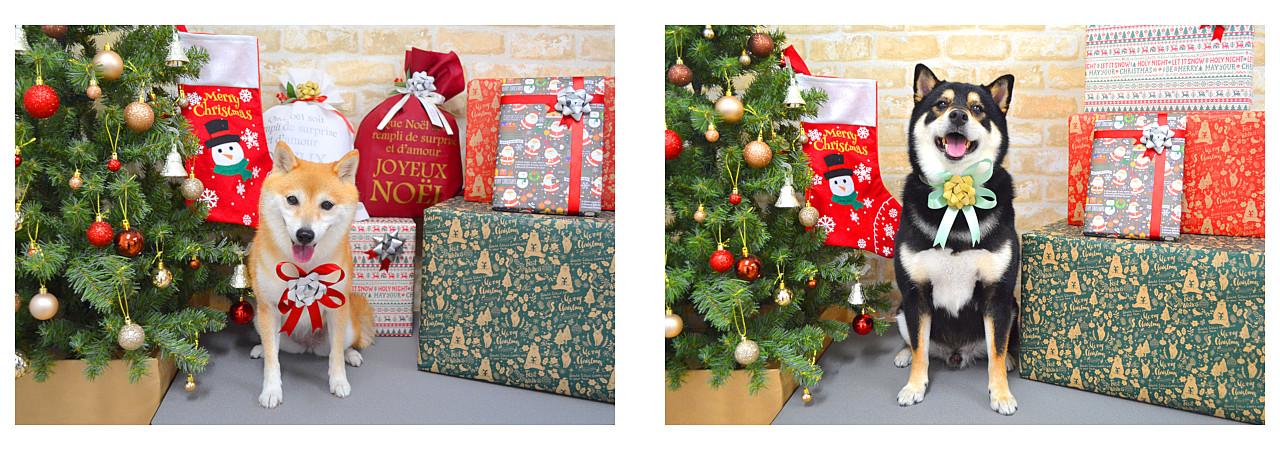 Christmasslide19.jpg