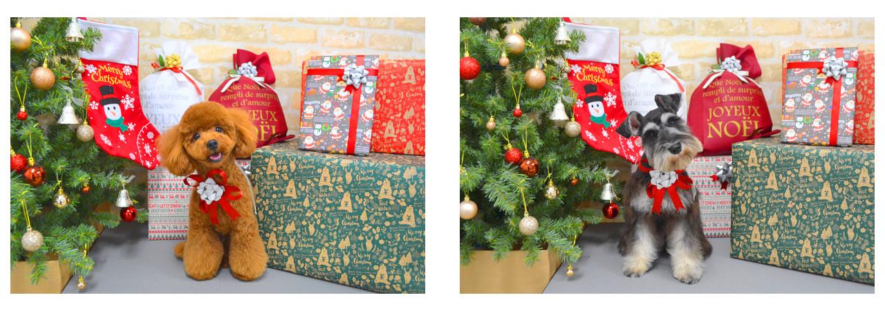 Christmasslide22.jpg