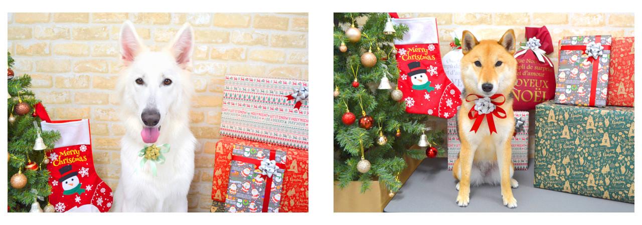 Christmasslide34.jpg