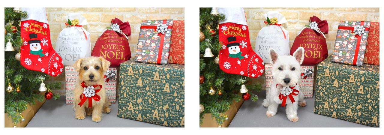 Christmasslide6.jpg