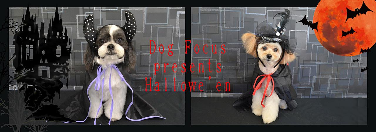 hallowe'enslide10.jpg