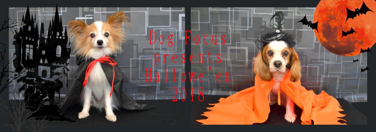 hallowe'enslide2018.jpg