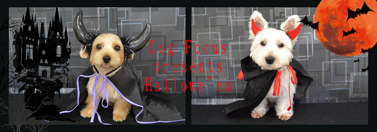 hallowe'enslide22