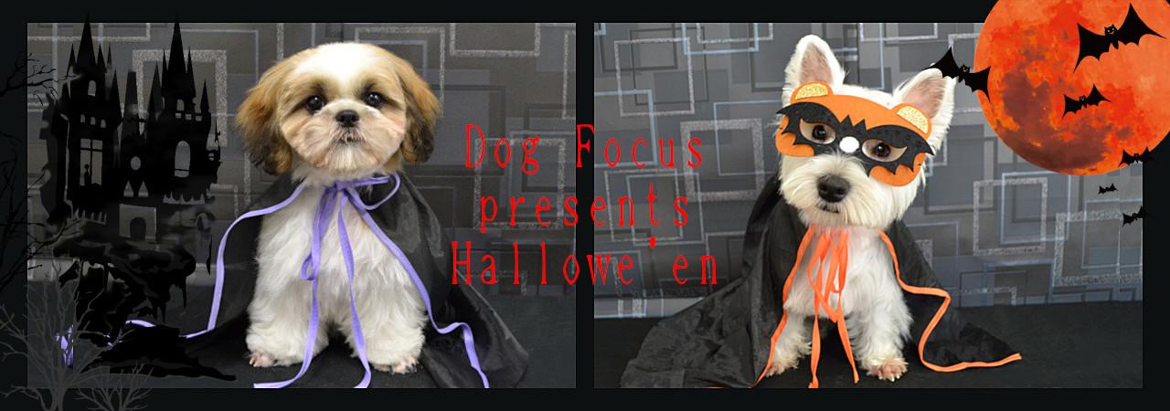 hallowe'enslide32