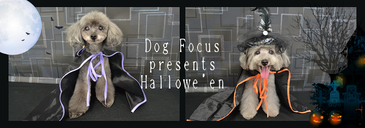 hallowe'enslide5.jpg