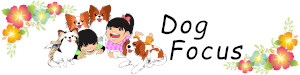 Dog Focus